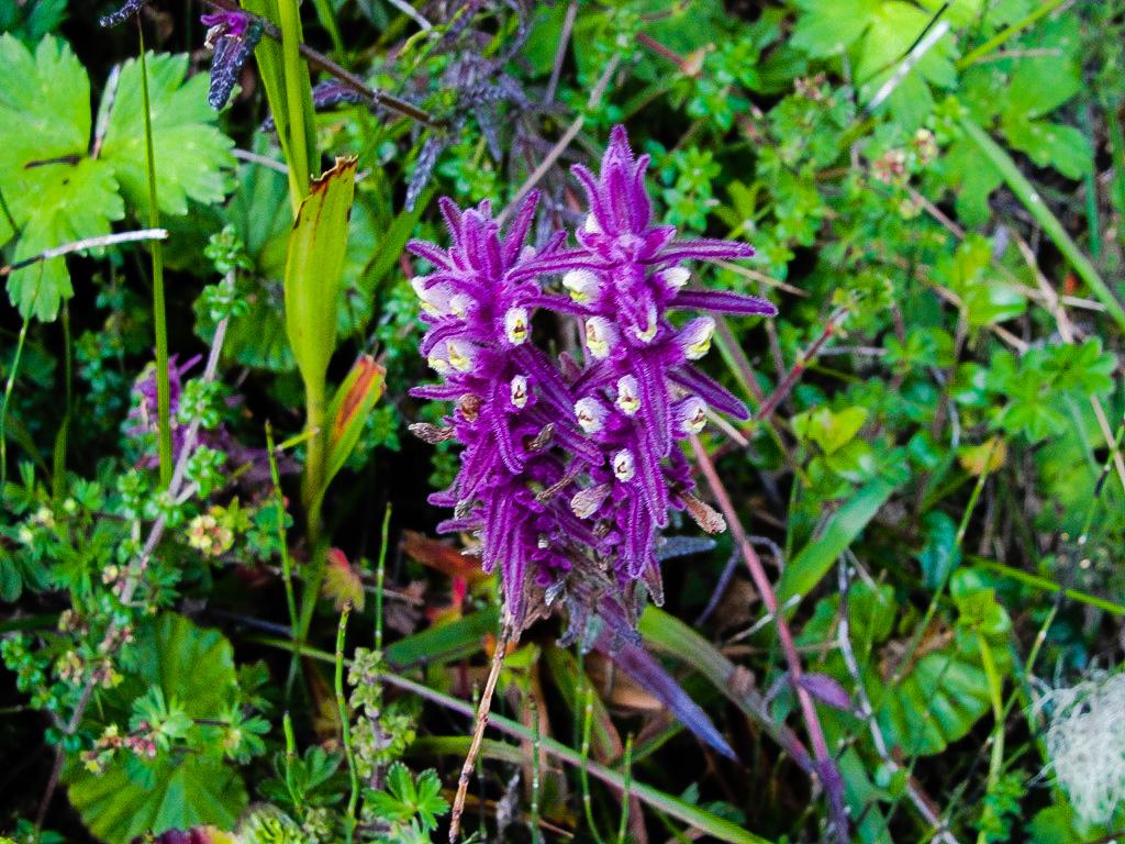 Flora Del Tungurahua Ecuventure