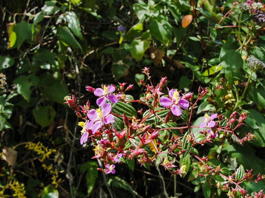 Flora Del Pululahua Ecuventure