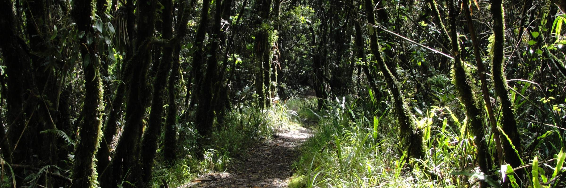 Refugio de Vida Silvestre Pasochoa